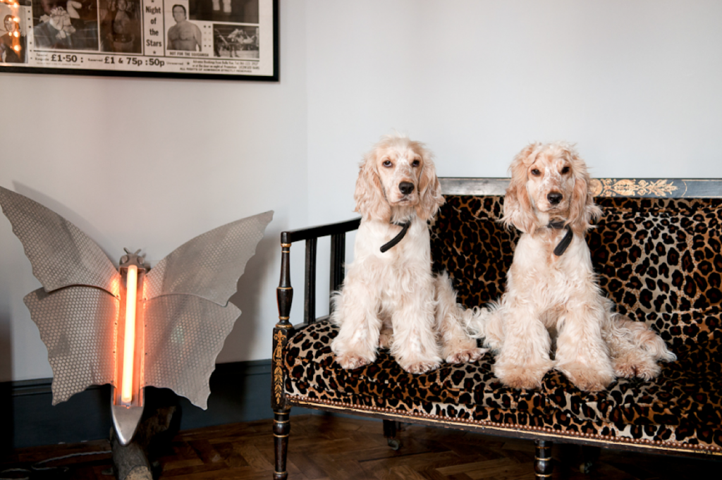 Jarvis and Joe, the couple's mischievous cocker spaniels